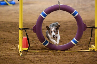 Delaware County Kennel Club AKC Agility Trial December 3-4