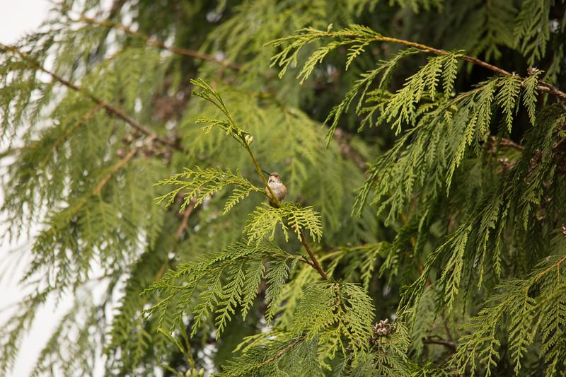 HUMMING BIRDS (23 of 104).jpg