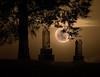 """""""Moon Life""""-"""