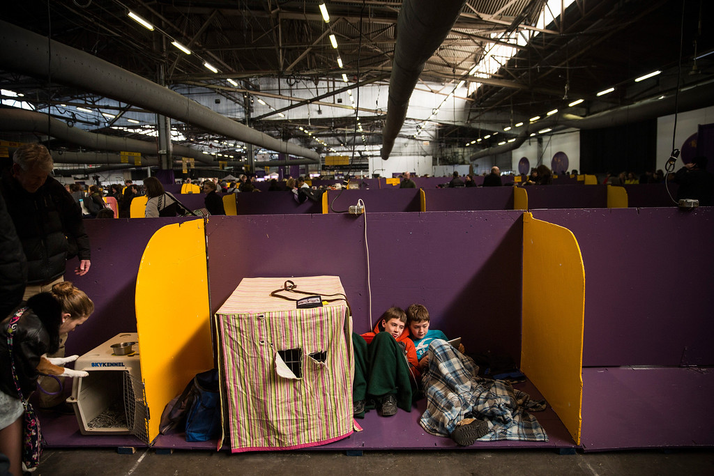 . Boys play on an iPad during the 138th annual Westminster Dog Show at the Piers 92/94 on February 10, 2014 in New York City. The annual dog show showcases the best dogs from around world for the next two days in New York.  (Photo by Andrew Burton/Getty Images)