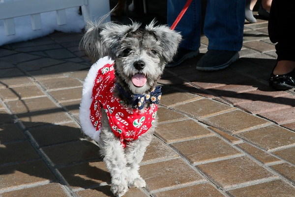 The District at Tustin Legacy - Santa Pets - Dec 08, 2018