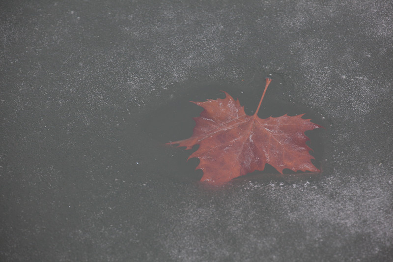 A fallen leaf absorbed enough heat from the sun to melt its own hole in a thin ice shelf.