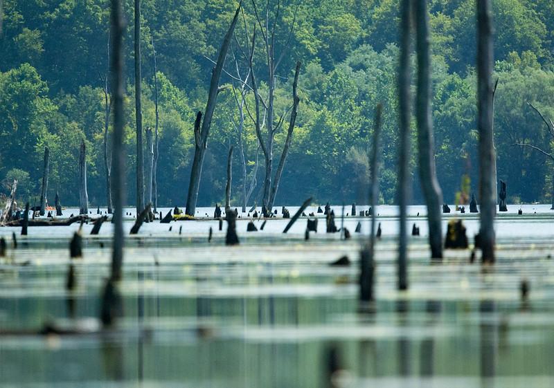Monksville Reservoir Kayaking (162 of 206).jpg