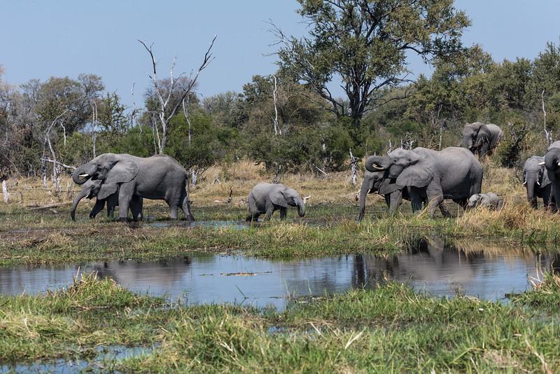 Botswana_June_2017 (3238 of 6179).jpg