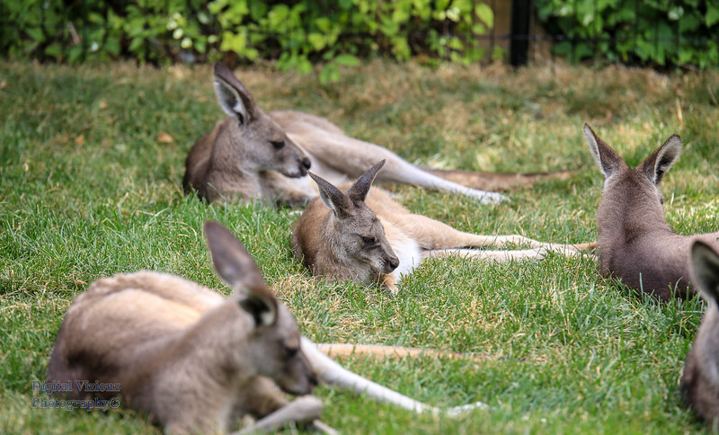 2016-07-17 Fort Wayne Zoo 857LR.jpg