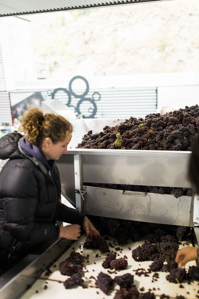 20171006_BC Wine Institute - Central & South Okanagan-2301.jpg