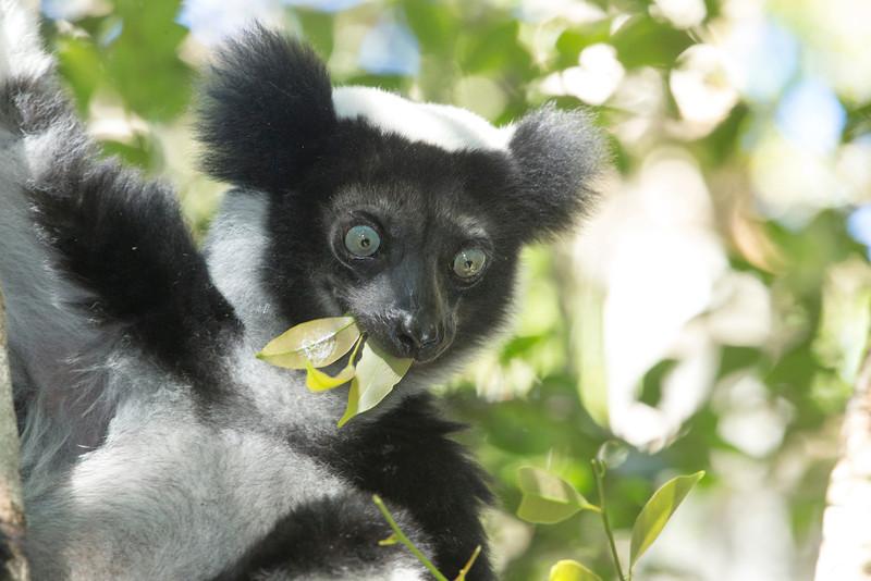 Madagascar_2013_FH0T9474.jpg