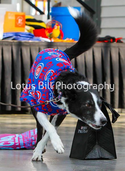 Black Tri Dog Chicago Cubs Mascot