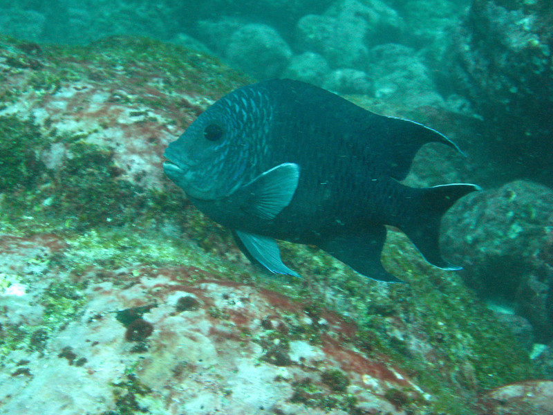 Diving in the Galapagos (351 of 392)