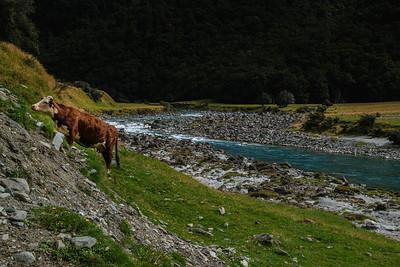 2015-03-17-New-Zealand-639.jpg