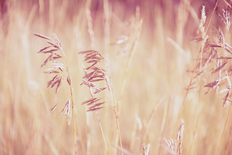 Autumn Grass.jpg