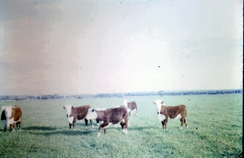 1966-7 (3).JPG