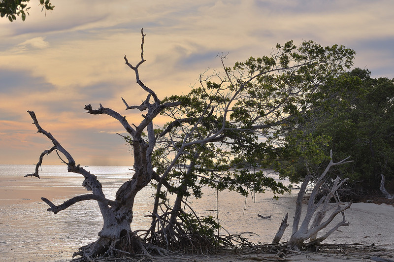 Evening beach walk at Long Key S. P.