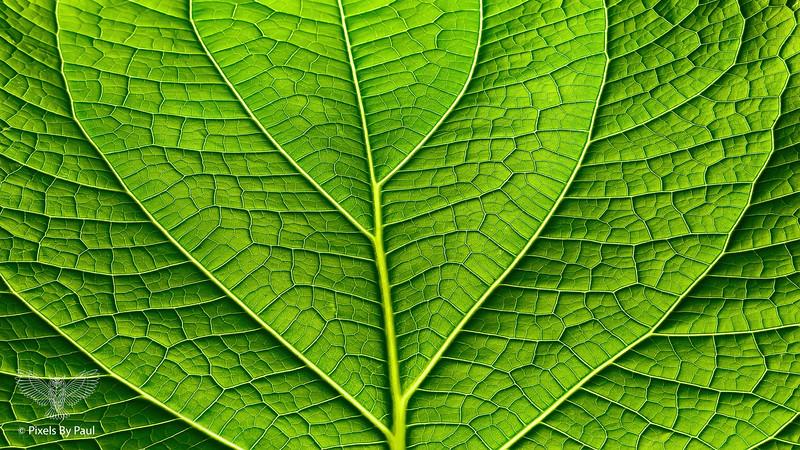 00980 Leaf Detail 16x9.jpg