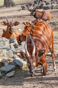 memphis-zoo-march-2014