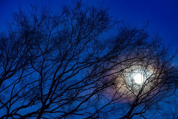 Blue_Blood_Moon