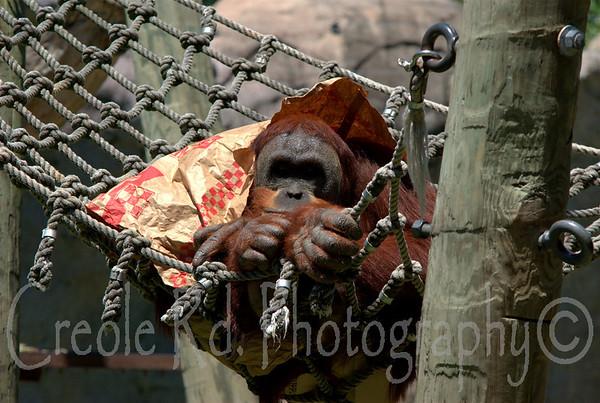 Audubon Zoo, New Orleans