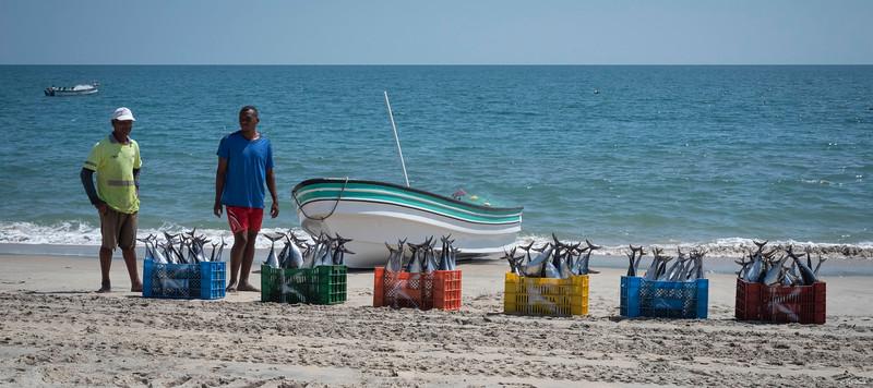Skipjack Tuna Catch