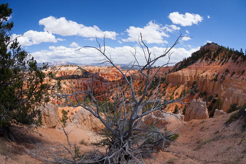 A view from Sunset Point in Bryce Canyon