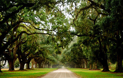 Charleston South Carolina.