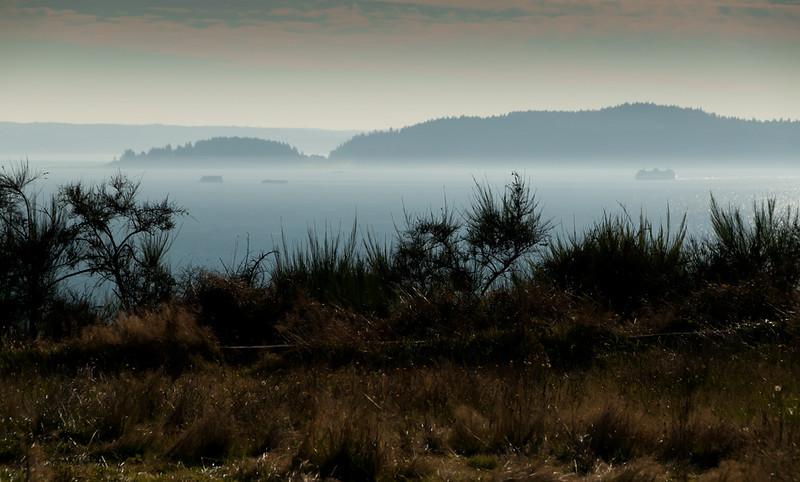 discovery_park_walk_12934_settling_fog-sm.jpg