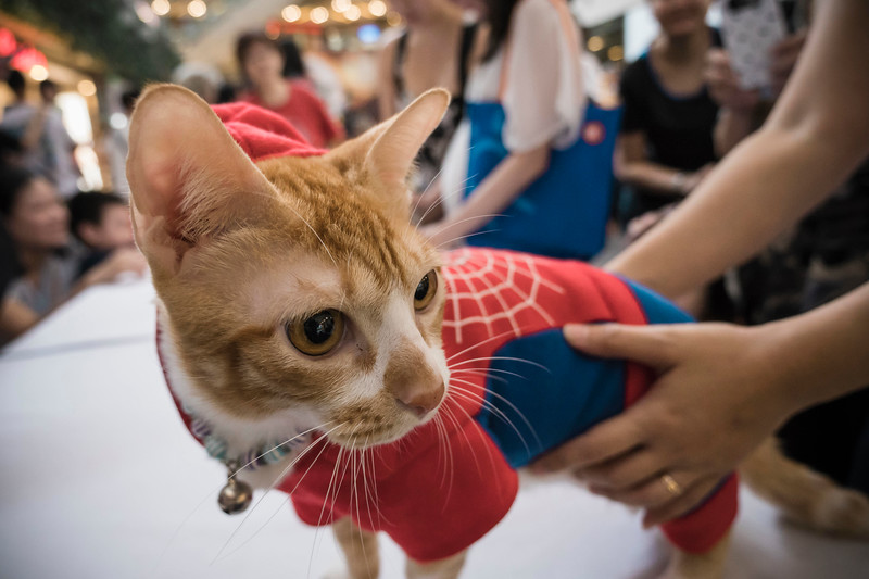 VividSnaps-The-Seletar-Mall-CAT-Dress-Up-Contest-073.jpg