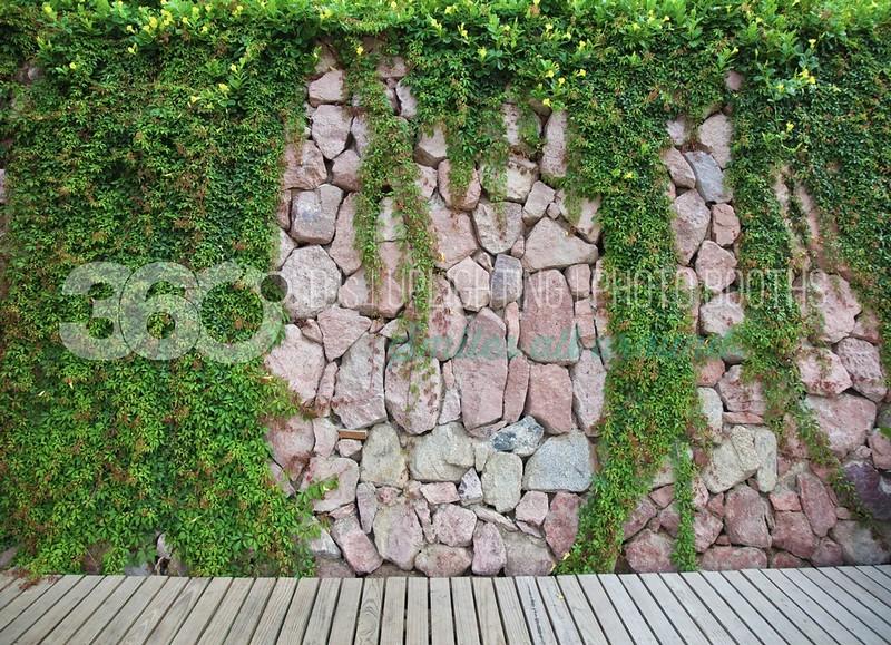 Ivy-Boardwalk_batch_batch.jpg