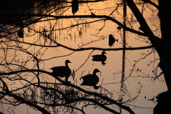 Greensprings Trail - Wildlife