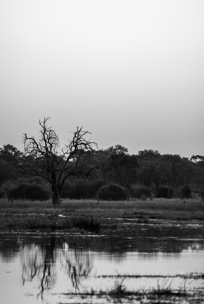 Botswana_June_2017 (2234 of 6179).jpg