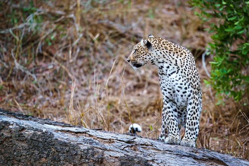 LeopardHills-20191029-2183.jpg