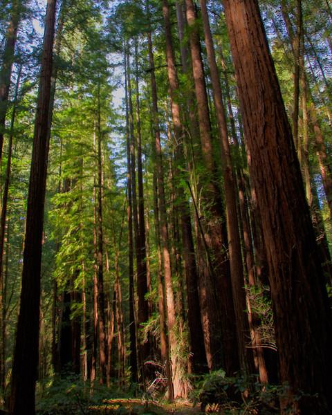 Armstrong State Park, California