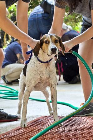 Dog Wash Season 2018: May