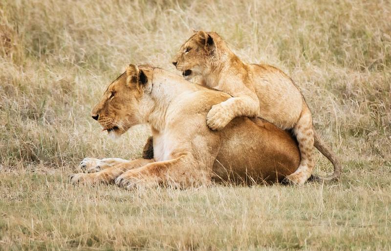 Tanzania-safari-22.jpg