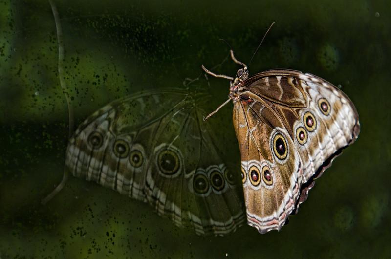 Cockrell-Butterfly-Center-0654-Edit.jpg
