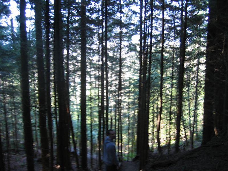 tall_trees.jpg