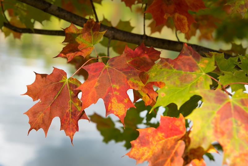 Fall Colors II-5899.jpg