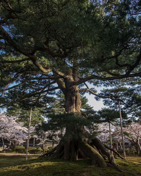 Kanazawa  080413 24 .jpg