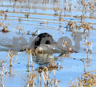 local-events-like-smith-county-delta-waterfowl-dinner-can-help-duck-and-hunter-numbers