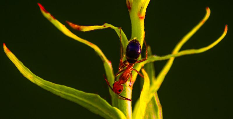 Bugs and Beetles - 142.jpg