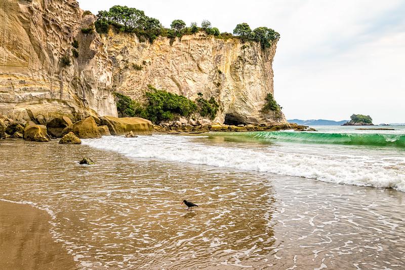 Stingray Beach, Coromandel, NZ