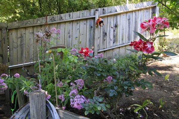 Lynn's Garden May 2020