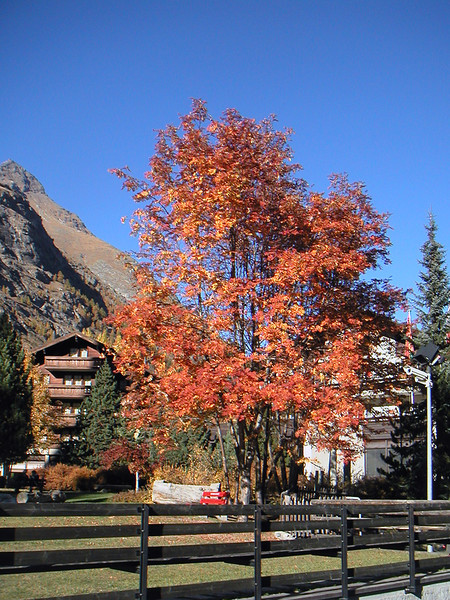 Zermatt20.JPG