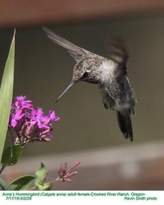 Anna's Hummingbird F93226.jpg