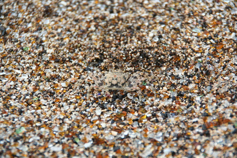 let's play Spot the Crab