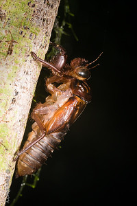 INSECT -cicada skin after molting-2575