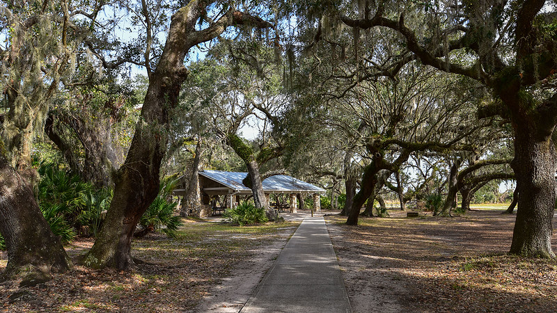 Picnic pavilion under oak canopy