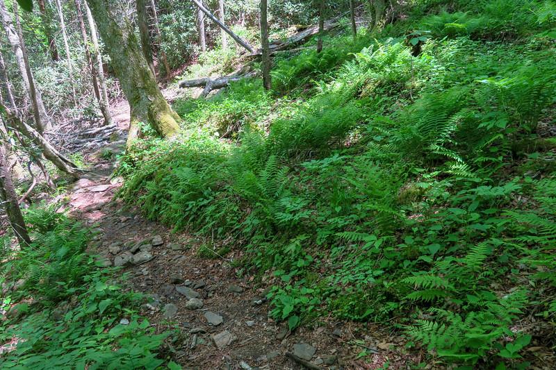Mountains-to-Sea Trail -- 4,700'