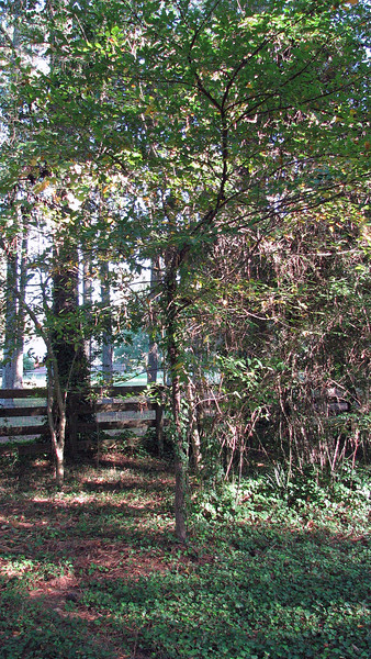 October 24:  A few backyard panorama pics .  .  .