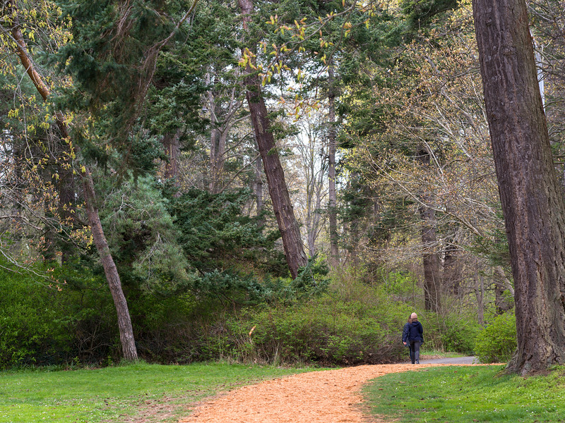 Two women walking in Beacon Hill Park, Fairfield, Victoria, British Columbia, Canada
