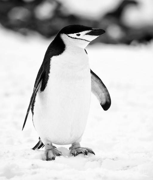 091204_penguin_island_8157.jpg